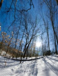 trees-covered-in-snow--path_19-138103